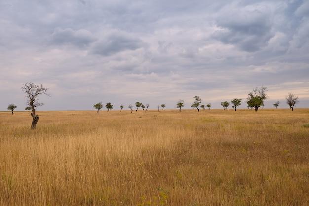 Imagens de outono ao ar livre da planície gramada com várias árvores no fundo. céu nublado sobre o prado do verão antes da chuva. ambiente, natureza selvagem, paisagens, campo, temporada e conceito de clima Foto gratuita