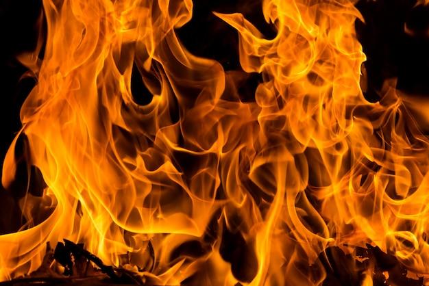 Incêndio florestal closeup para plano de fundo Foto Premium