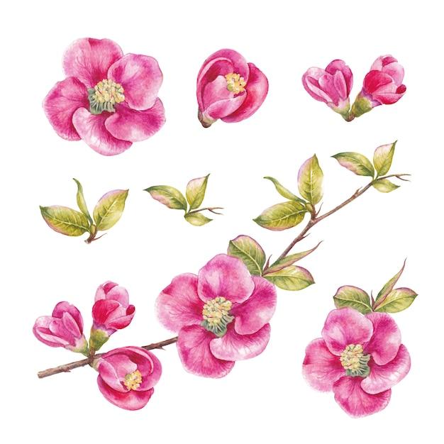 Incrível coleção de flores da primavera. Foto Premium