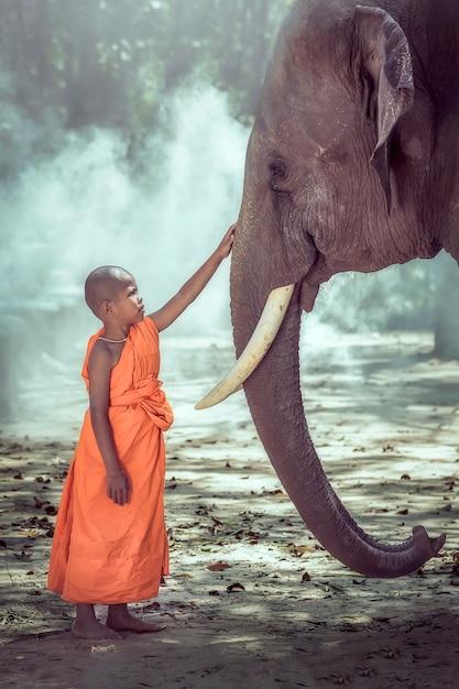 Iniciante monge budista sendo compassivo elefante, surin, tailândia Foto Premium
