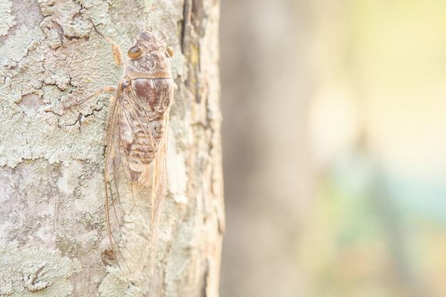 Insetos marrons em árvores e padrão. Foto Premium