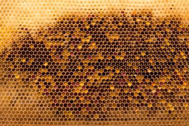 Interior de um favo de mel Foto Premium