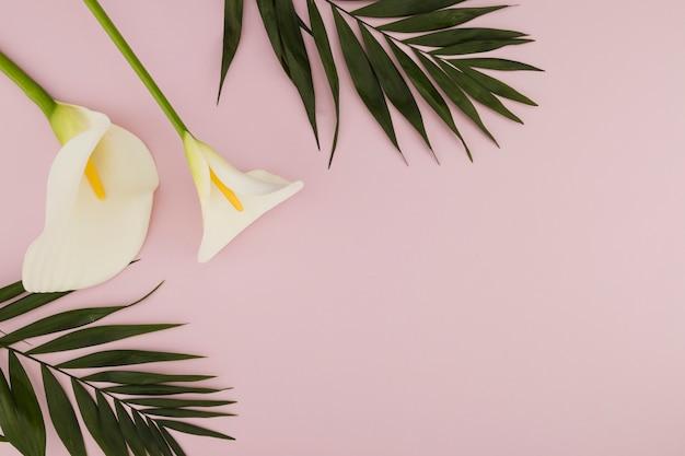 Íris de vista superior e folhas tropicais Foto gratuita