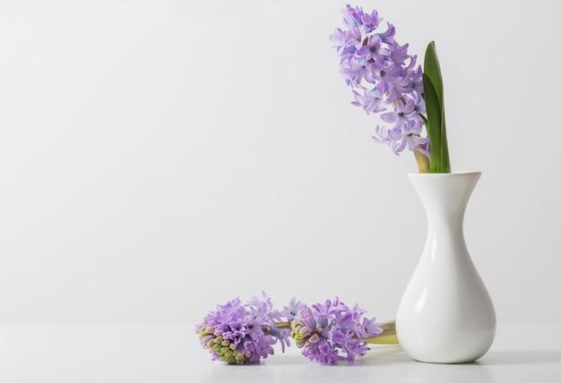 Jacinto em um vaso no fundo branco Foto Premium