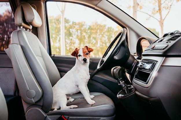 Jack cute russell cachorro relaxante em uma van. conceito de viagens Foto Premium