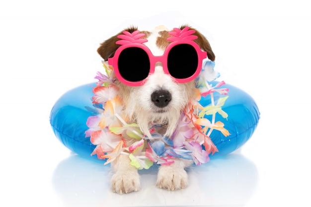 Jack russell dentro de um óculos de sol infláveis desgastando. Foto Premium