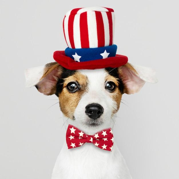 Jack russell terrier bonito no chapéu do tio sam e gravata borboleta Foto gratuita
