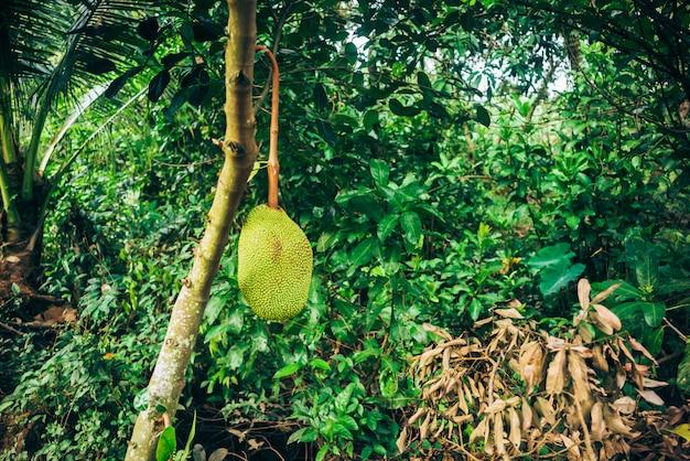 Jackfruit fresco Foto Premium