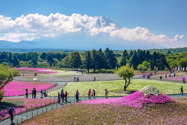 Japão - maio de 19,2017: os turistas apreciam o passeio do festival de shibazakura no jardim de shibazakura (musgo cor-de-rosa) com o monte. fundo fuji, fujinomiya Foto Premium