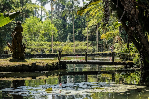 Jardim botânico rio de janeiro   Foto Premium