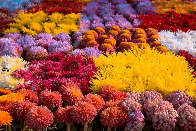 Jardim colorido da flor da primavera Foto gratuita