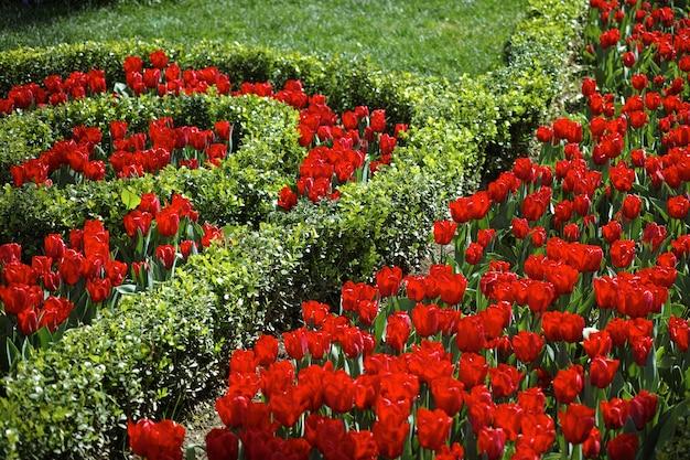 Jardim com rosas Foto gratuita