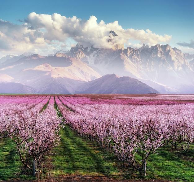 Jardim de árvores florescendo Foto Premium
