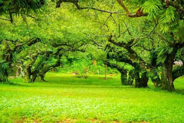 Jardim de damasco japonês. foco suave. Foto Premium