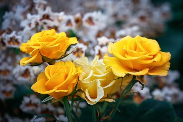 Jardim lindo de verão com rosas florescendo. Foto Premium