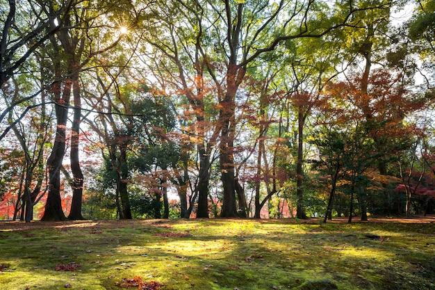 Jardim outono Foto Premium