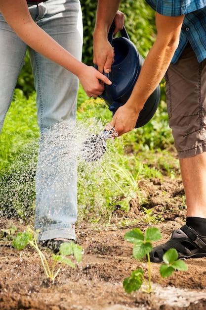 Jardinagem, regando as plantas Foto Premium