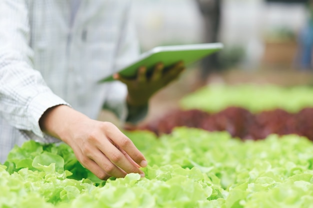 Jardineiro colheita legumes da horta em casa. Foto Premium