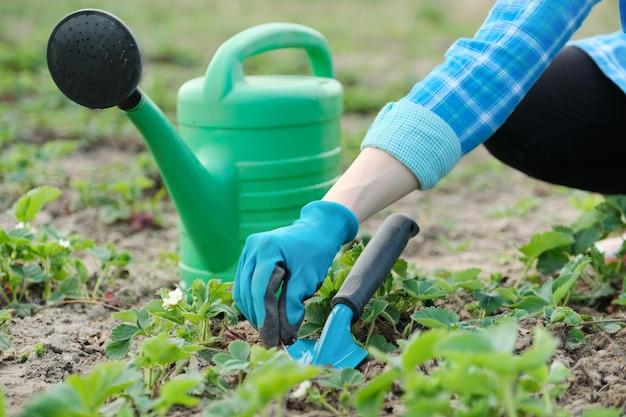 Jardineiro cultiva o solo com ferramentas manuais, jardinagem de primavera Foto Premium