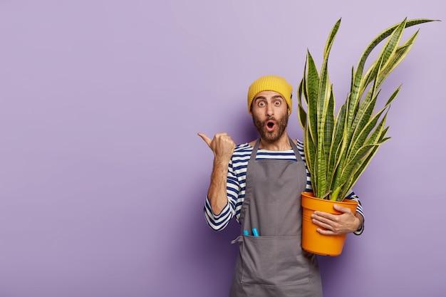 Jardineiro de flores com a barba por fazer impressionado carrega um vaso com uma bela planta de língua de sogra Foto gratuita