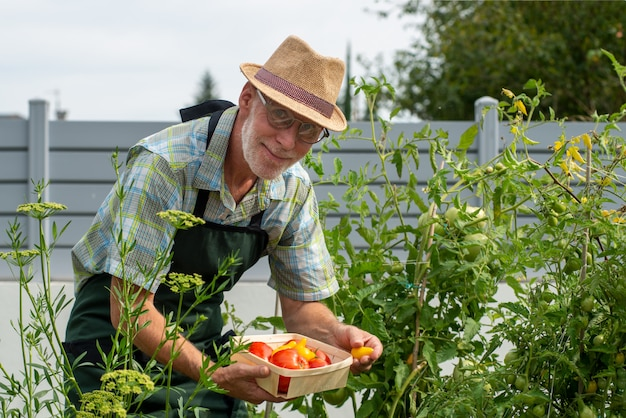 Jardineiro de homem colhendo tomates na horta Foto Premium