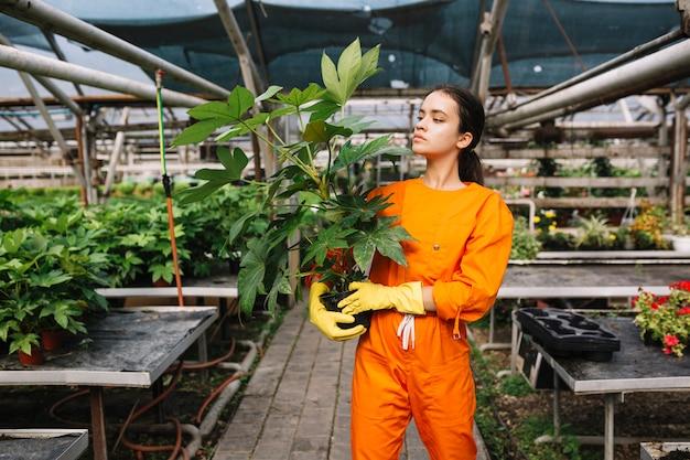 Jardineiro fêmea novo que olha a planta em pasta na estufa Foto gratuita