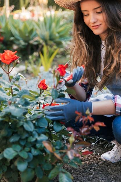 Jardineiro feminino bonito, corte a rosa com tesouras de podar Foto gratuita