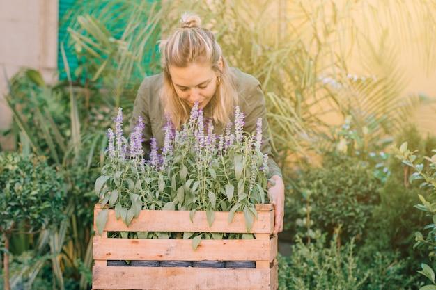 Jardineiro feminino, cheirando as plantas de lavanda na caixa no viveiro de plantas Foto gratuita