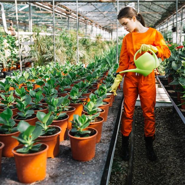 Jardineiro feminino pulverização de água em vasos de plantas em estufa Foto gratuita