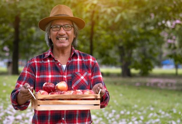 Jardineiro idoso sorrindo e segure maçãs em uma caixa de madeira após a colheita da fazenda de maçã Foto Premium