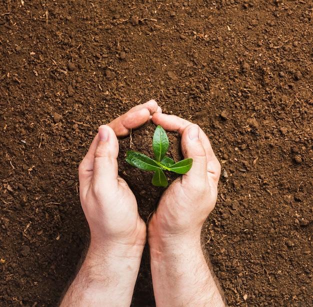 Jardineiro, plantando, chão Foto gratuita