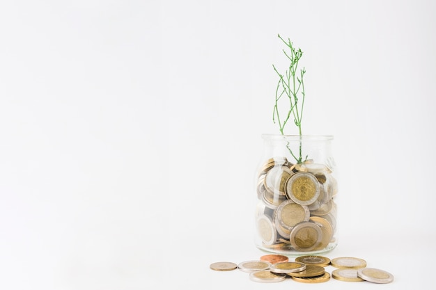 Jarra com moedas e planta Foto gratuita