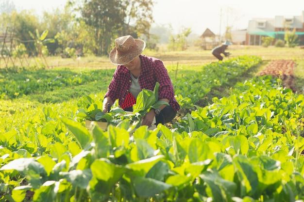 Jovem agricultor com legumes orgânicos em caixas de madeira ele vai entregar legumes frescos aos clientes. Foto Premium
