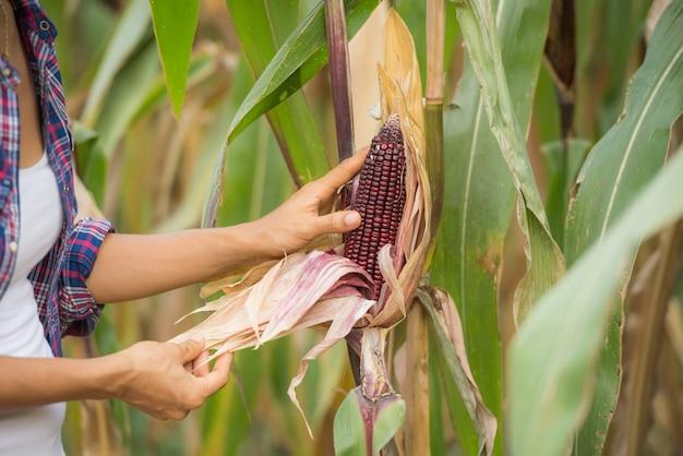 Jovem agricultor feminino trabalhando no campo e verificando as plantas Foto gratuita