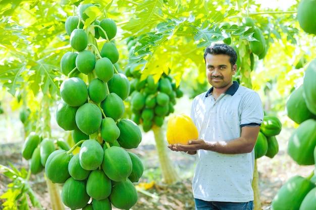Jovem agricultor indiano no campo de mamão Foto Premium