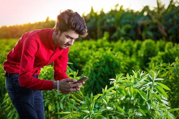 Jovem agrônomo indiano analisando campo com smartphone Foto Premium
