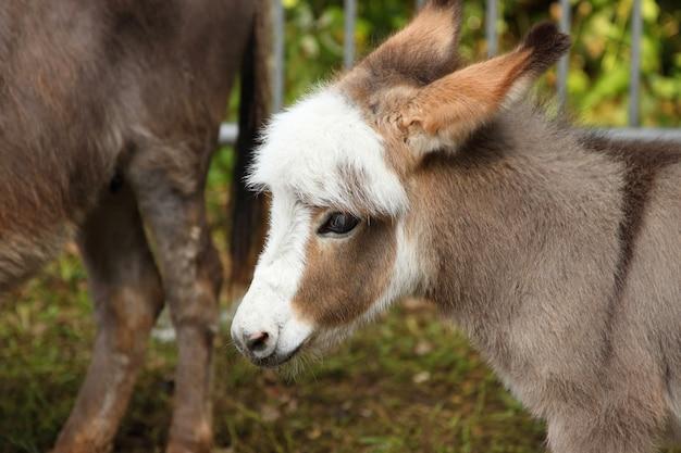 Jovem burro jovem cu Foto Premium