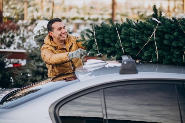 Jovem entregando árvore de natal no carro Foto gratuita