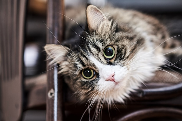 Jovem gato doméstico bonito em casa, closeup Foto Premium