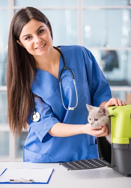 Jovem médico feminino com um lindo gato lindo. Foto Premium