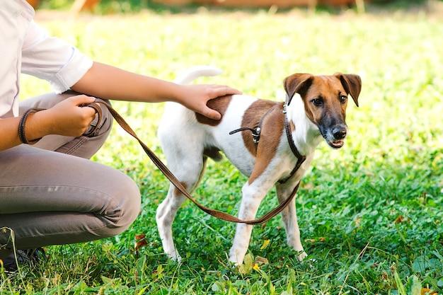 Jovem rapaz com jack russel terrier ao ar livre. cara em uma grama verde com cachorro. proprietário e seu cachorro na coleira no parque. amizade, animais e estilo de vida. Foto Premium