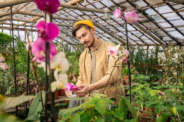 Jovem sério barbudo de chapéu verificando as pétalas enquanto cultivava orquídeas em estufa Foto Premium
