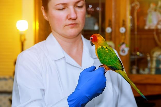 Jovem veterinário alimentação papagaio na clínica veterinária Foto Premium