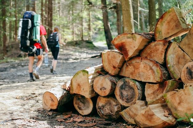 Jovens a caminhar com mochilas na floresta Foto Premium