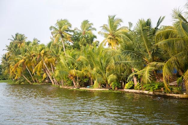 Kerala, índia Foto Premium