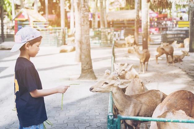 Kid está alimentando alimentos para veados alegremente Foto gratuita