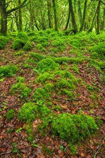 Killarney floresta hdr livre Foto gratuita