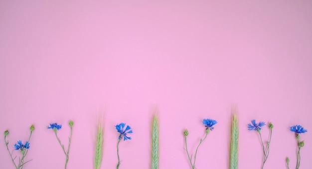 Knapweeds azuis e espiga de trigo deite em uma linha no fundo rosa Foto Premium