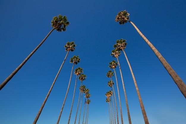 La los angeles palmeiras em uma linha típica da califórnia Foto Premium