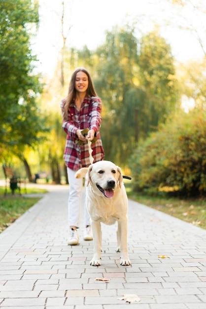 Labrador adorável fora para uma caminhada Foto gratuita
